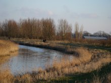 Foto Red rhoonse polder landschap hooglanders