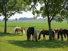 Foto Red rhoonse polder Paarden